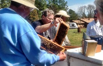 Managing Russian Bees 114